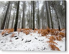 Acrylic Print featuring the photograph Winter Forest Landscape by Michalakis Ppalis