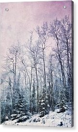 Winter Forest Acrylic Print by Priska Wettstein