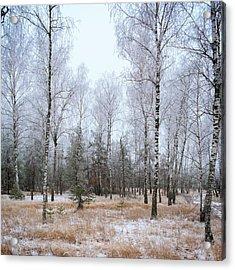 Winter Forest. Shchymel, 2014. Acrylic Print