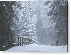 Winter Forest With Golden Retriever Acrylic Print