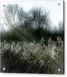 Acrylic Print featuring the photograph Winter Fringe by Kendall McKernon