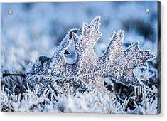 Winter Frost Acrylic Print