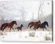 Winter Gallop Acrylic Print by Mike  Dawson