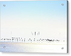 Winter Geese Frozen Ice Acrylic Print