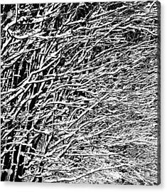 Acrylic Print featuring the photograph Winter by Gert Lavsen