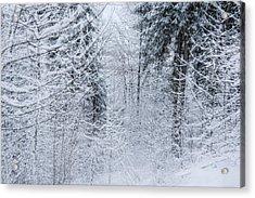 Winter Glow- Acrylic Print