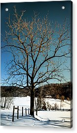 Acrylic Print featuring the photograph Winter Glow by Karen Wiles