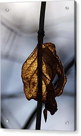 Winter Glow Acrylic Print by Off The Beaten Path Photography - Andrew Alexander