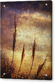 Winter Gold Acrylic Print by Skip Nall