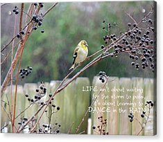 Winter Goldfinch In The Rain With Quotation Acrylic Print