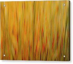Winter Grasses #1 Acrylic Print