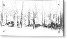 Snowy Forest - North Carolina Acrylic Print