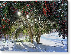 Acrylic Print featuring the photograph Winter Holly by Jessica Brawley