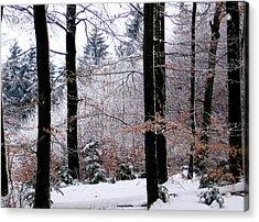 Winter In Krauchthal II Acrylic Print by David Ritsema