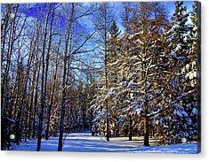 Winter In Maine Acrylic Print by Gary Smith