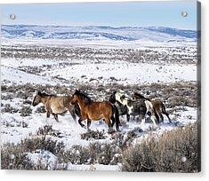Winter In Sand Wash Basin - Wild Mustangs On The Run Acrylic Print
