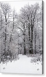 Winter In The Forest Acrylic Print by Gabriela Insuratelu