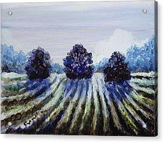 Winter In The Vineyard Acrylic Print by Shelley Capovilla