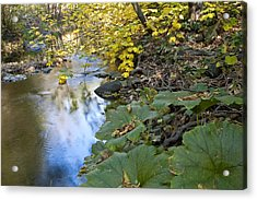 Winter Is Coming On Rock Creek Acrylic Print by Charlie Osborn