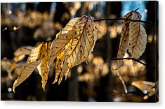 Winter Leaves Left Acrylic Print