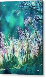 Winter Lights Acrylic Print