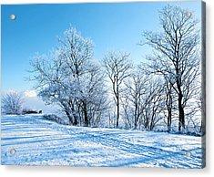 Winter Lights Acrylic Print by Svetlana Sewell