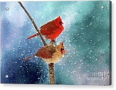 Acrylic Print featuring the photograph Winter Love by Darren Fisher