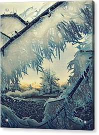 Winter Magic Acrylic Print by Colette V Hera Guggenheim