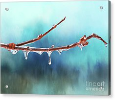 Winter Magic - Gleaming Ice On Viburnum Branches Acrylic Print