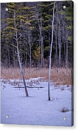 Winter Marsh And Trees Acrylic Print