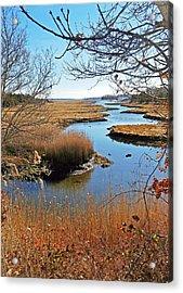 Winter Marsh Acrylic Print