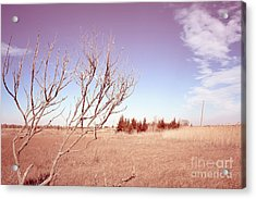 Acrylic Print featuring the photograph Winter Marshlands by Colleen Kammerer
