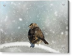 Acrylic Print featuring the photograph Winter Morning by Eva Lechner