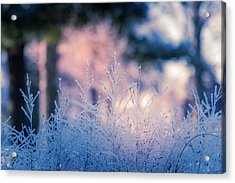 Winter Morning Light Acrylic Print