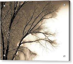 Winter Mulberry  Acrylic Print by Larry Ney  II