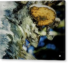 Winter Mushroom Acrylic Print