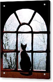 Winter Musing Acrylic Print by Angela Davies