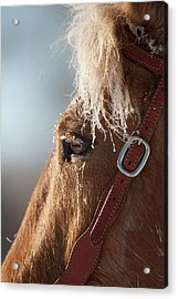 Winter Mustang Eye Acrylic Print