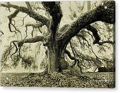 Winter Oak Acrylic Print by Scott Pellegrin