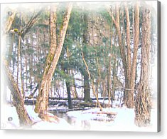 Acrylic Print featuring the photograph Winter Oasis by Debi Dmytryshyn