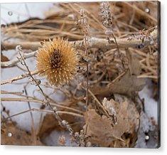Winter On The Range Acrylic Print