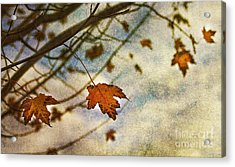 Winter On The Way Acrylic Print by Rebecca Cozart