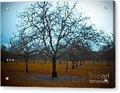 Winter Orchard Acrylic Print