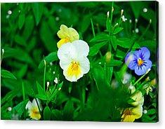 Winter Park Violets 1 Acrylic Print