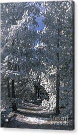 Winter Pathway Acrylic Print by Sandra Bronstein