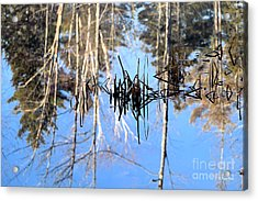 Winter Pond Acrylic Print by Elizabeth Dow