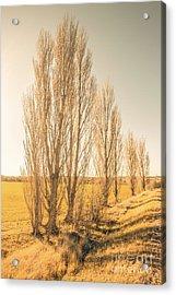 Winter Poplar Trees Acrylic Print by Jorgo Photography - Wall Art Gallery