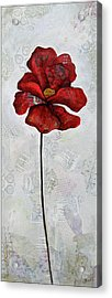 Winter Poppy I Acrylic Print by Shadia Derbyshire