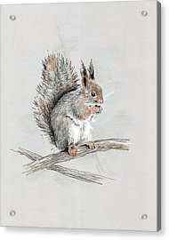 Winter Red Squirrel Acrylic Print