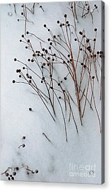 Winter Rest Acrylic Print by Diane E Berry